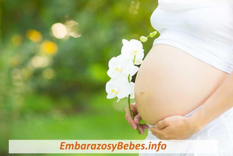 Las Hormonas Del Embarazo