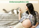 El Embarazo y los Gatos (Es Seguro Tener Gatos en el Embarazo?)