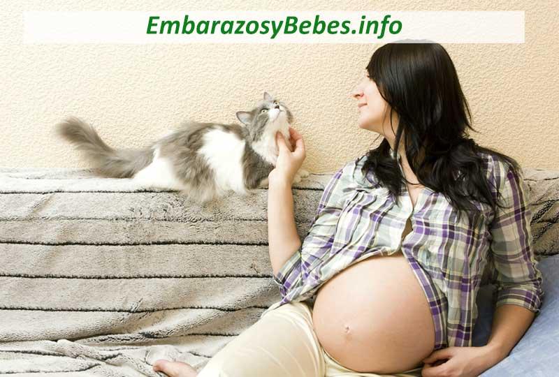 El Embarazo y los Gatos