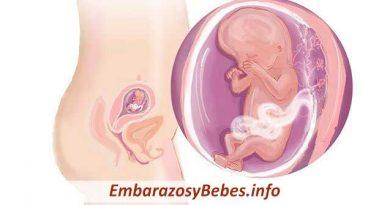 Semana 10 De Embarazo Síntomas Cuidados Panza Y Ecografía