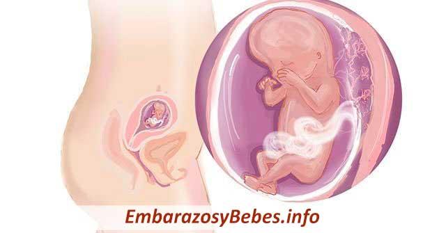 17bc9b38d Semana 13 de Embarazo (Síntomas