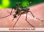 ¿Como Afecta el Virus del Zika al Embarazo y al Bebé?