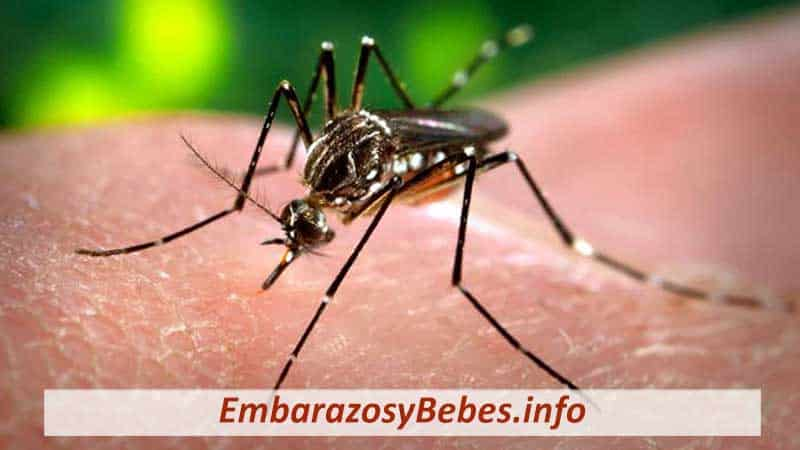 Virus del Zika en el Embarazo